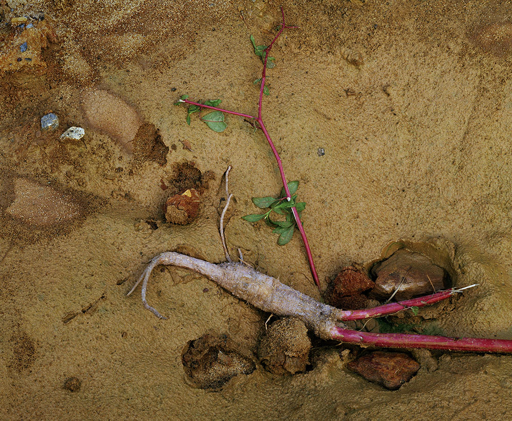 <em>Root</em>