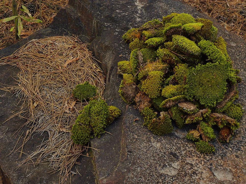 <em>Moss Mound</em>